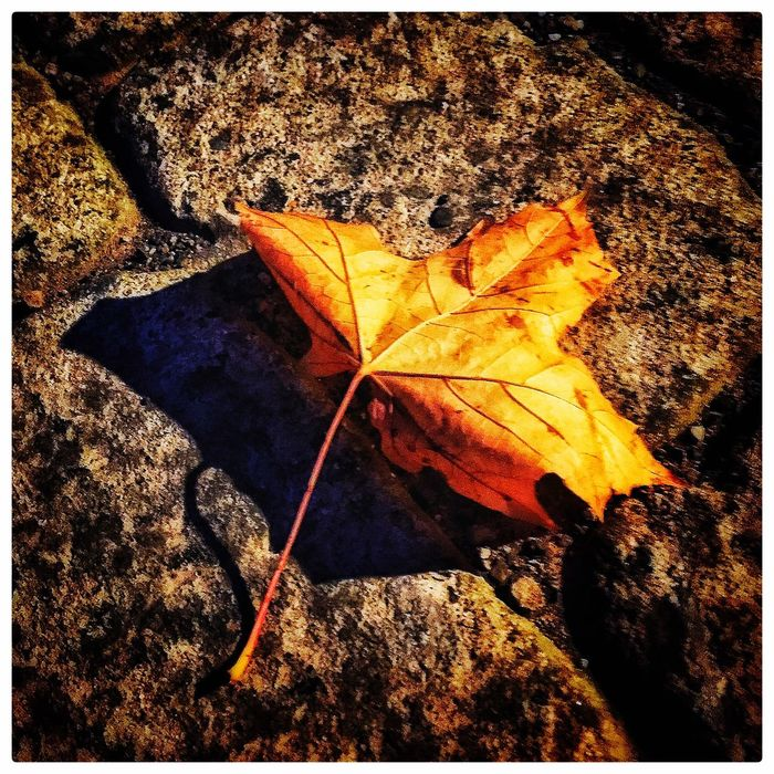 Leaf! Walking Around Hugging A Tree Nature Nature_collection