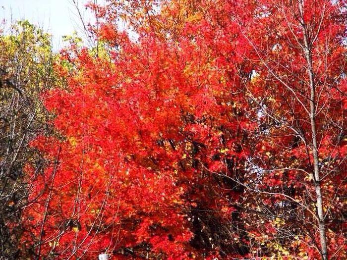 Fall Autumn Trees Colors