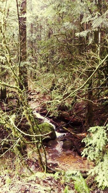Coquitlam Vancouver BC Canada Wildlife Stream