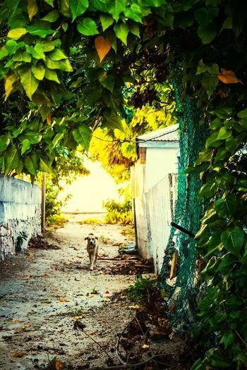 alley stroll~