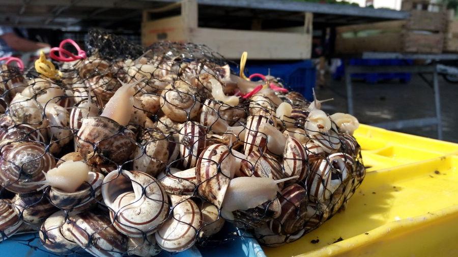 lumache vive al mercatino Food Snails Escargots🐌 Market Lumache Ciamaruche