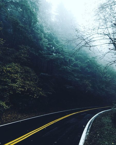 My Favorite Place Black Road Tree Transportation Empty Road Nature Double Yellow Line Outdoors