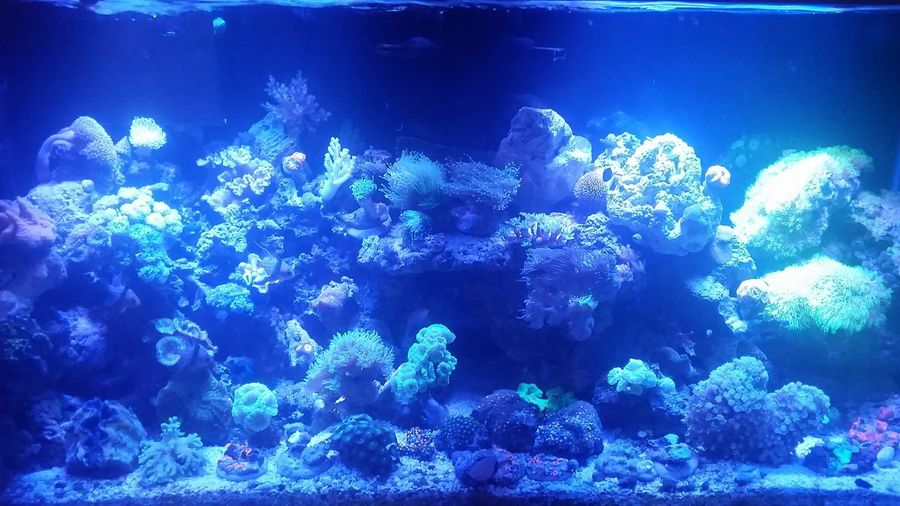 Without the flash, you can see the beauty... ill take close up's but here it is... Zoas New Polyps  Saltwater Anemone Mushrooms Salt Water Ocean Water Coral Reefs My Tank New Edition Clam