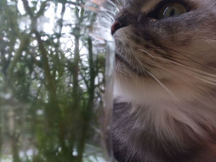 Eyeem Russia One Animal Domestic Cat Pets Animal Themes Whisker Cat Close-up Indoors  Portrait Last Year My Cat Green Grenery Plant Pet Portraits