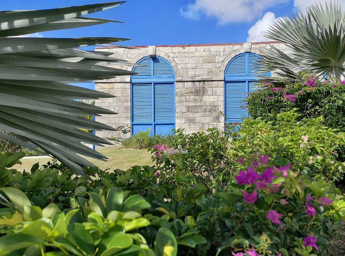 Flowering plants by building against sky