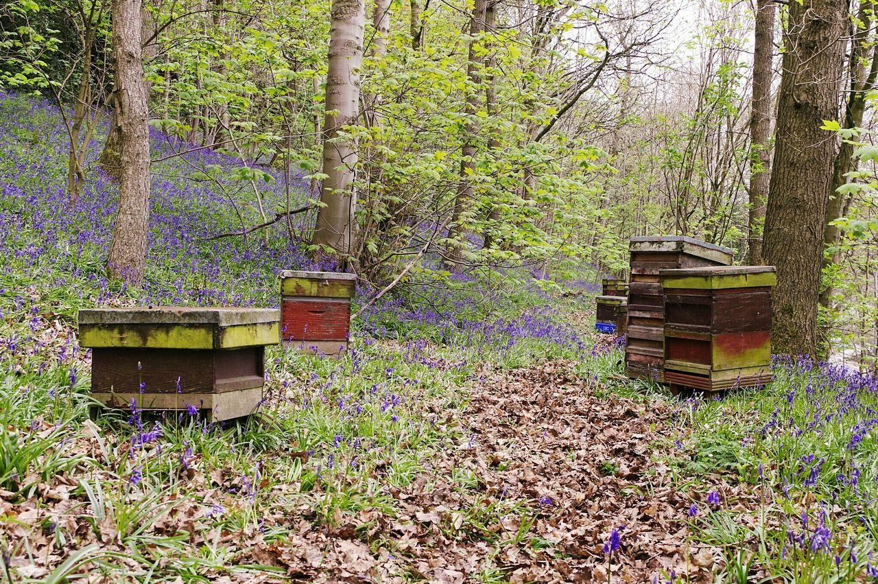 beehive, apiculture, nature, bee, tree, day, outdoors, no people, purple, wood - material, forest, tree trunk, landscape, multi colored, beauty in nature, grass