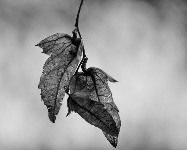 Taking Photos Depth Nature Flower Collection Black And White Portrait Trees Monocrome The Illuminator - 2014 EyeEm Awards