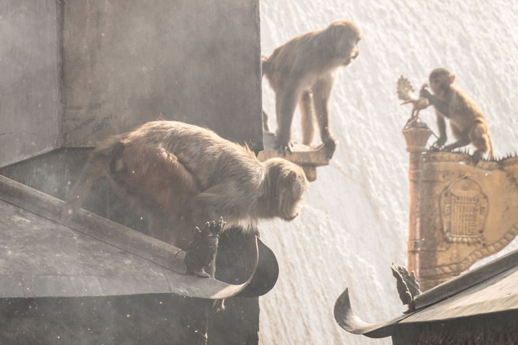 View of monkey sitting on wood