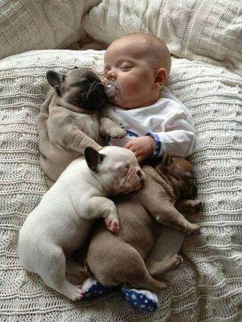 Dogstagram Baby Baby ❤ Dog Love