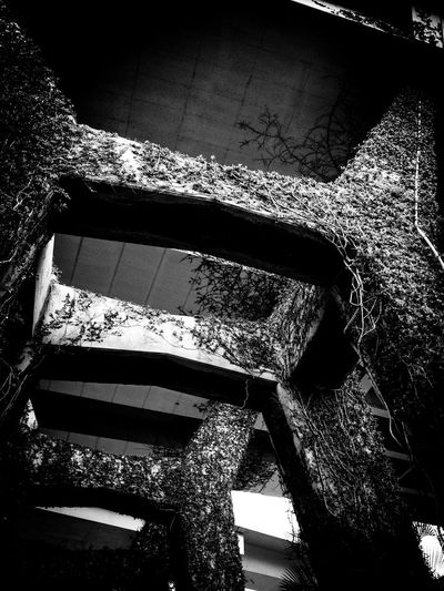 The Benjamin Sheares Flyover, Singapore Architecture Below The Bridge Black And White Bridge Support Built Structure Climbing Plants Close-up Day Engineering Focus On Foreground Growth Nature No People Outdoors The Architect - 2018 EyeEm Awards