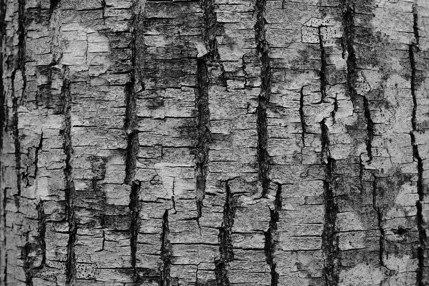 Textured  Backgrounds Close-up Wood - Material No People Tree Nature Textured Effect
