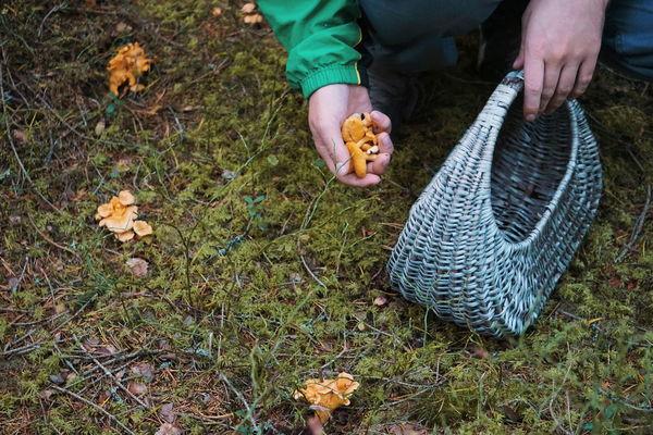 picking mushrooms Basket Picking Mushrooms Mushroom Mushrooms Fungus Fungus 🍄 Foredt Human Body Part Human Hand Human Hand Low Section Men High Angle View Working Close-up