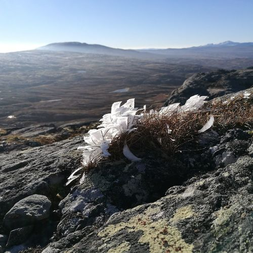 Frosted grass on rocks