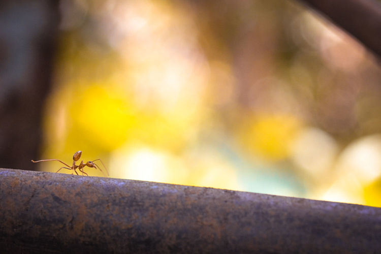 Close-up of ant on retaining wall
