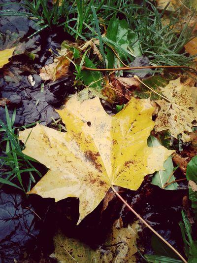 Deszczowy dzień Beautiful Nature EyeEm Nature Lover Autumn Colors