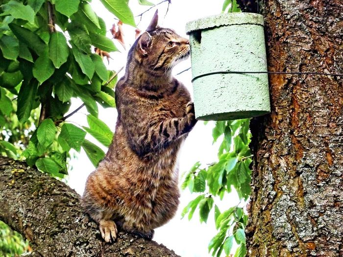 Cat on tree trunk