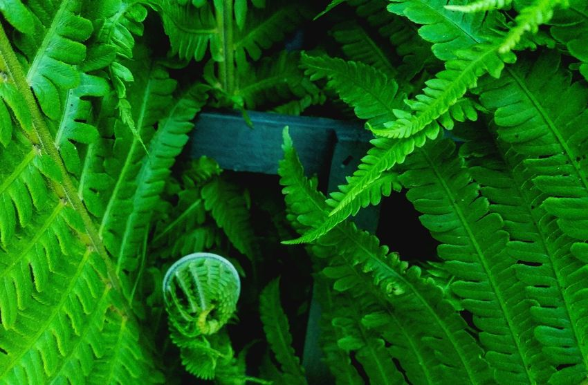 Jurassic Quiet Places Country Life Emerging Silent Moment Science Microbiology Close-up Magnification Fern Blooming Plant Life Leaf Vein Complexity Natural Pattern Leaves Tendril Frond