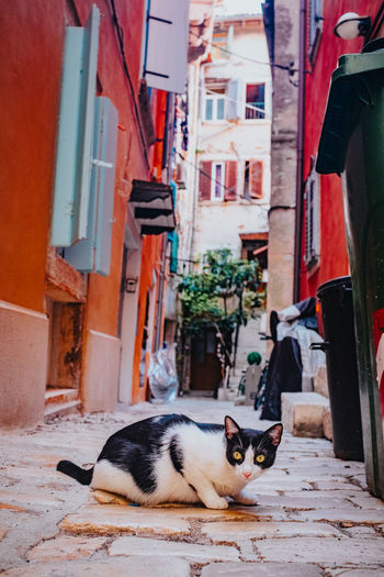 Cat relaxing amidst buildings in city