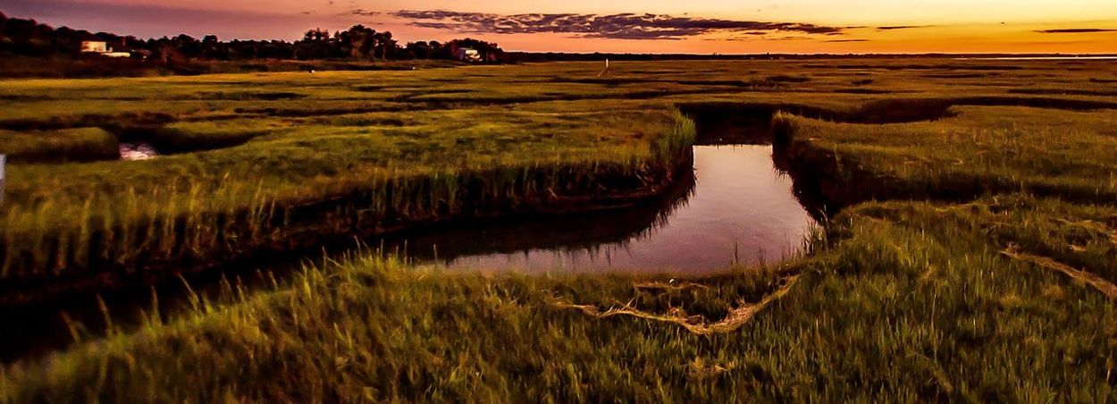 Nature Scenics Tranquil Scene Beauty In Nature Landscape Tranquility Water Outdoors Growth Agriculture Grass No People Sky Day Seascape Sunset Golden Capecodimages Marshes Tranquility Wide Shot EyeEm Nature Lover Grays Beach