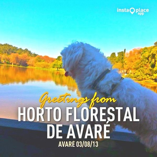 Hortoflorestal Avare InstaPlace Mydog dog maltes cachorro like love photographer photooftheday tagsforlikes cute followme adorable amazing