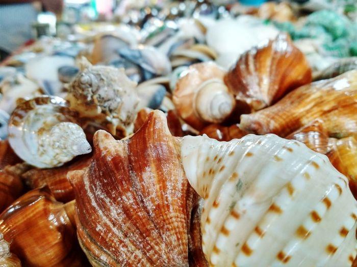 Market Crustacean Seashell Close-up