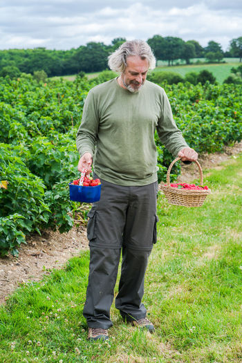 A middle aged male holding a basket full of freshly picked raspberries and strawberries Agriculture Basket Farm Farmer Food And Drink Fresh Produce Garden Photography Harvest Harvesting Industry Landscape Lifestyles Male Adult Standing Male Holding Basket With Fruit Middle Aged Male Standing Middle Aged Man Outdoors Raspberries Red Fruit Strawberries