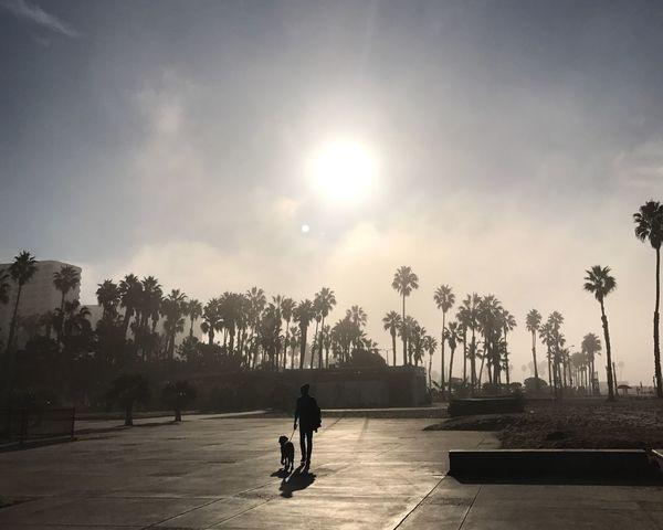 Morning Light Mananddog Sunlight One Person Beach Walk