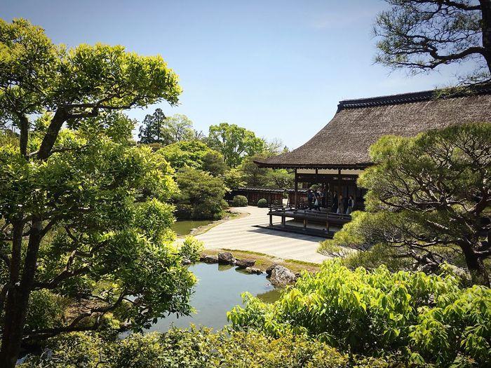 仁和寺 仁和寺御殿 京都 Kyoto Kyoto, Japan Travel Destinations Beauty In Nature Architecture Kyoto Garden Enjoying Life Relaxation 3XSPUnity Hello World Relaxing Japanese Garden