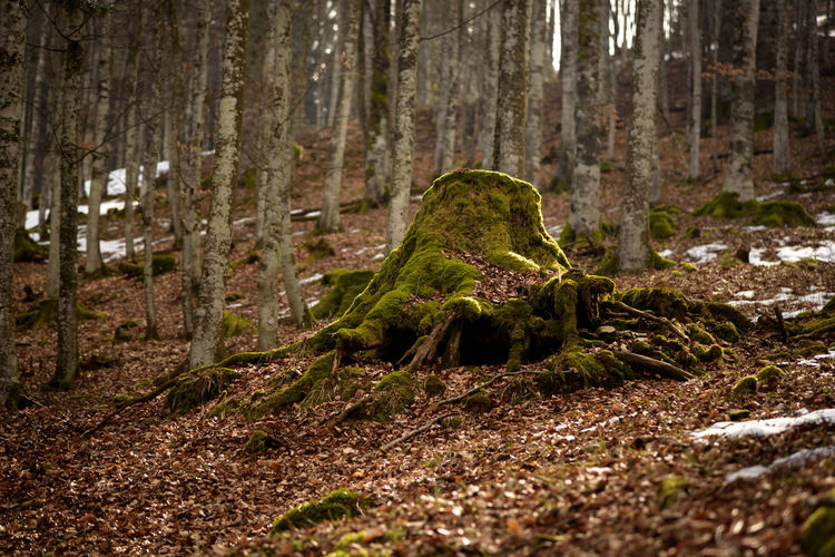 Erve Erve Miozzo Photo Miozzo Non-urban Scene Animal Dirt Environment Green Color Tranquility Selective Focus Nature Trunk No People WoodLand Tree Trunk Forest Plant Tree Land Rainforest Surface Level Moss Day Growth Outdoors