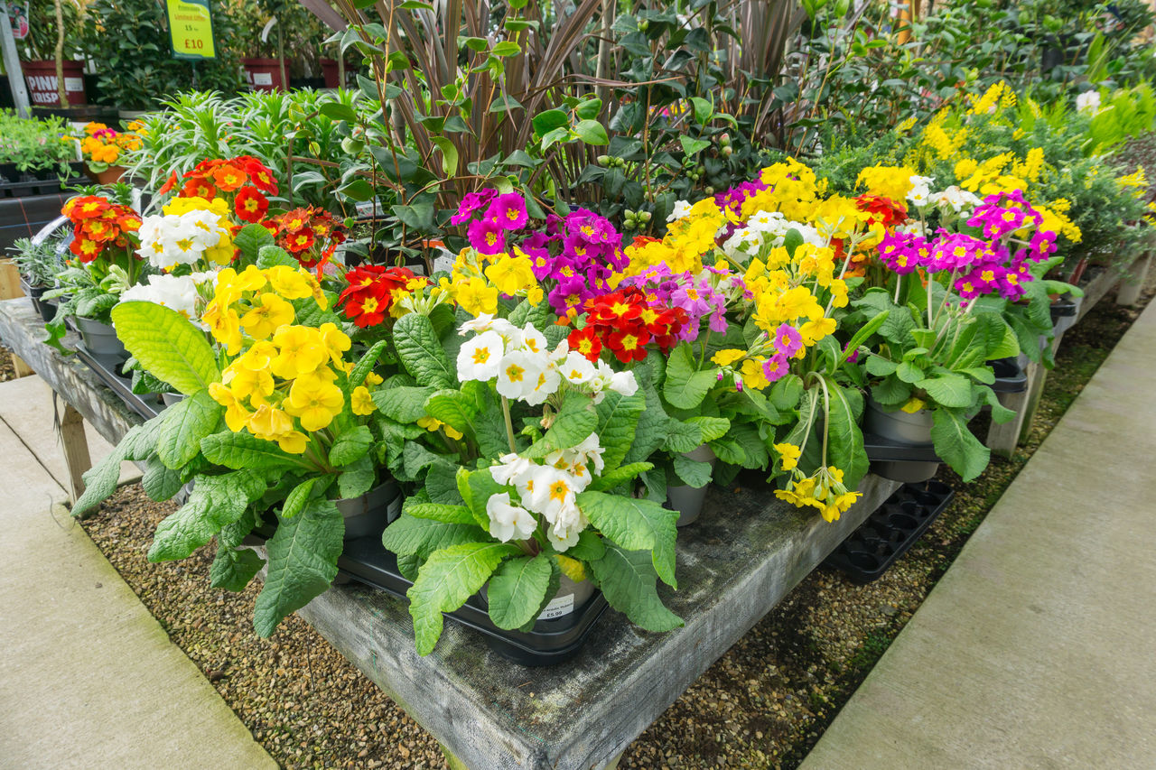 flower, variation, multi colored, plant, freshness, fragility, nature, beauty in nature, tulip, growth, flower head, abundance, leaf, blossom, petal, yellow, day, retail, flowerbed, springtime, no people, choice, hyacinth, outdoors, flower market, greenhouse