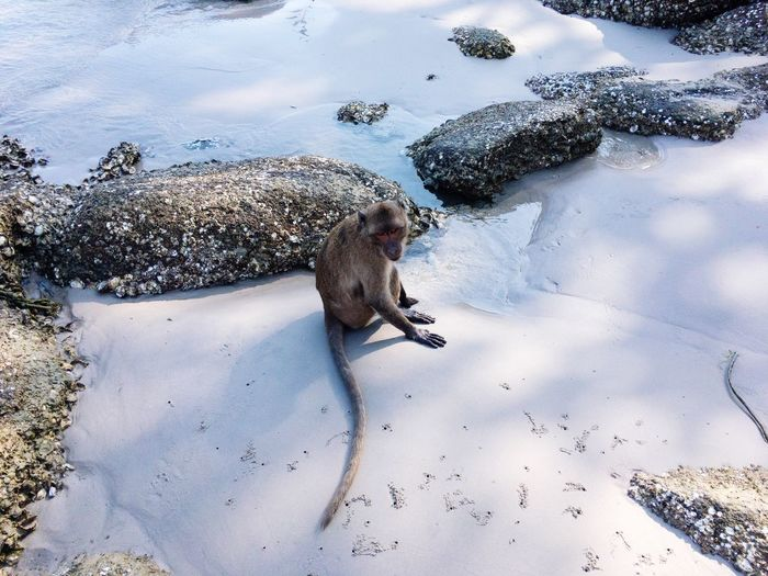 High angle view of monkey sitting on snow