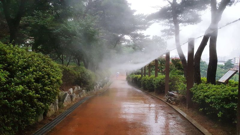 Tree Water Outdoors Wet No People Day Freshness Sprinkler Park Spray Fog Walking