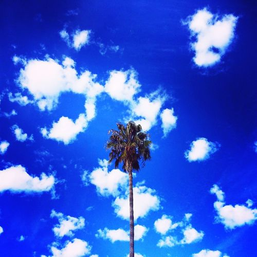 Surreal sky California Outdoors Pacific Ocean Gaviotacoast Nature Agriculture Life In The Tropics Palms Palm Trees Palm Tree