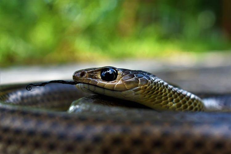 dead snake on