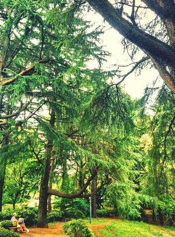 病院の小路 Urban Forest Garden Tree_collection  Eyem Nature Lovers  Himalayan Cedar