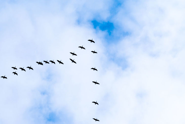 Directly Below Shot Of Birds Flying Against Cloudy Sky