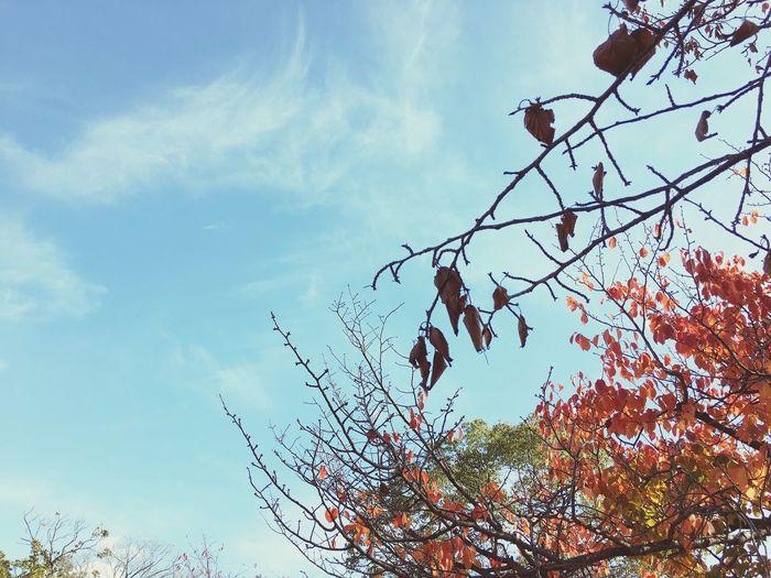 Sky Tree First Eyeem Photo