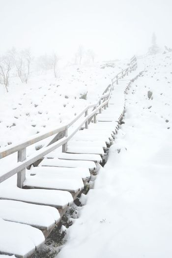 Snow covered stairs leading into cold fog. Beauty In Nature Cold Temperature Covered Day Diminishing Perspective Frozen Landscape Lapland, Finland Nature No People Non-urban Scene Outdoors Scenics Season  Sky Snow Snow Covered Snowcapped Stairs The Way Forward Tranquility Tree Weather White Color Winter