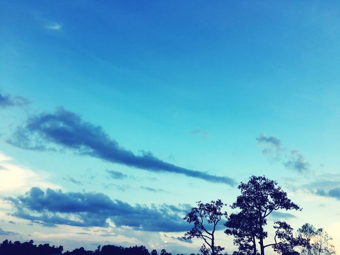 Sky Tree Blue Low Angle View Nature Growth Cloud - Sky No People Silhouette Beauty In Nature Outdoors Scenics Tranquility Treetop Day