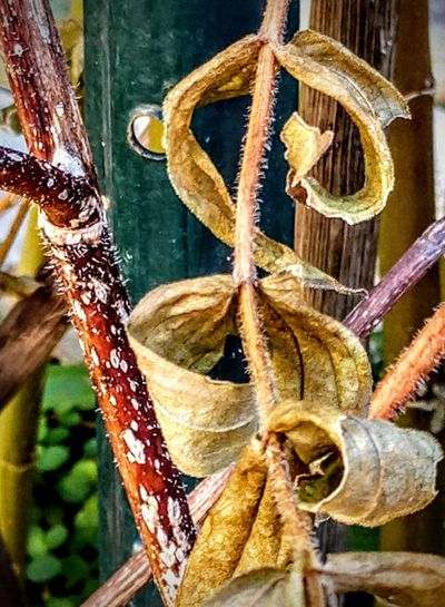 quantum of solace Autummood Beautiful Decay Bestoftheday Shapes And Forms Gracefully Dead Textures Close-up Autumn Mood