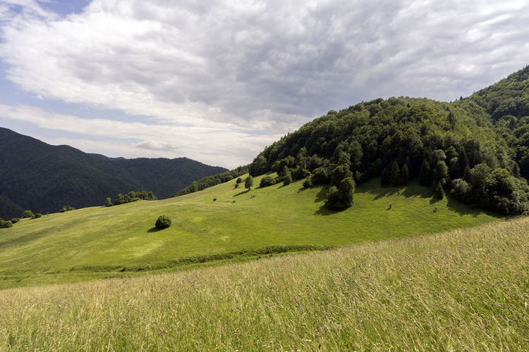 Velka Fatra Beauty In Nature Cloud - Sky Day Environment Field Grass Green Color Growth Land Landscape Mountain Nature No People Non-urban Scene Outdoors Plant Rolling Landscape Scenics - Nature Sky Tranquil Scene Tranquility Tree
