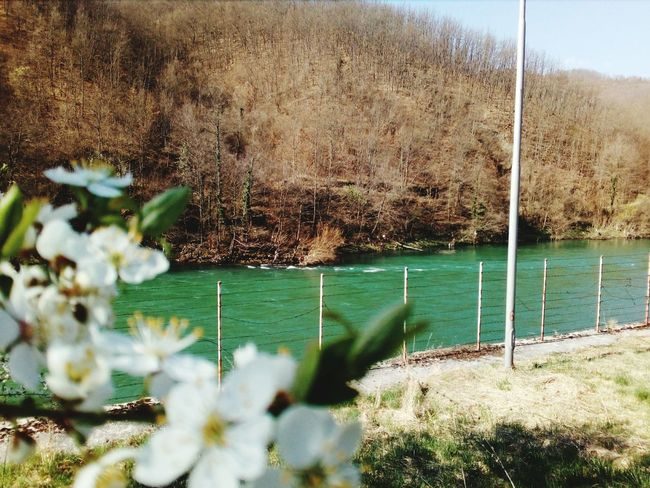 Water Nature Day Outdoors Plant No People Growth Sea Grass Close-up Spring Flowers Spring Plant Tree Flower Flower Head Pollen Sun On The Water Lim Serbian Beautiful Nature Serbianbeauty Serbian Serbian_beauties Wood Serban Photos The Great Outdoors - 2017 EyeEm Awards Lost In The Landscape Perspectives On Nature