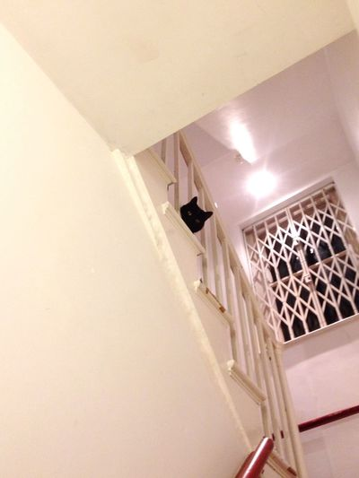 Cat Indoor Cats Stairs Stairways Home