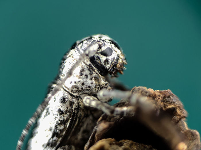 Close-up of insect on sea