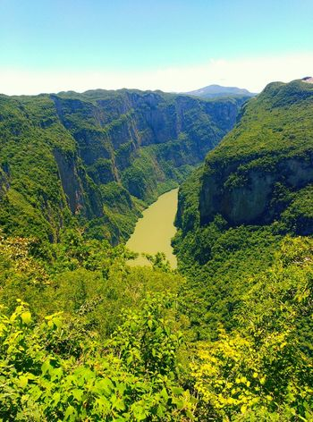 Cañon del sumidero Beauty In Nature Green Color Landscape Scenics Mountain Forest Gold Water Water_collection Leaves 🍁 Chiapas, México Beauty In Nature Mexicolors Water Naturelovers Leaves🌿 Mexico Nature Photography Lovephotography  Movilephotography River View River Collection Amazing Nature <3