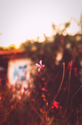 Flowers Flower Flowers,Plants & Garden Flower Photography Flowerphotography Pink Pink Flower Pink Color Pinkflower Róż Różowo Różowy Rozowe Kwiat Kwiaty Kwiatki Kwiatek Kwiatuszki Ateny Grecja Athens Greece Greece Athens Greece 2015 Photography