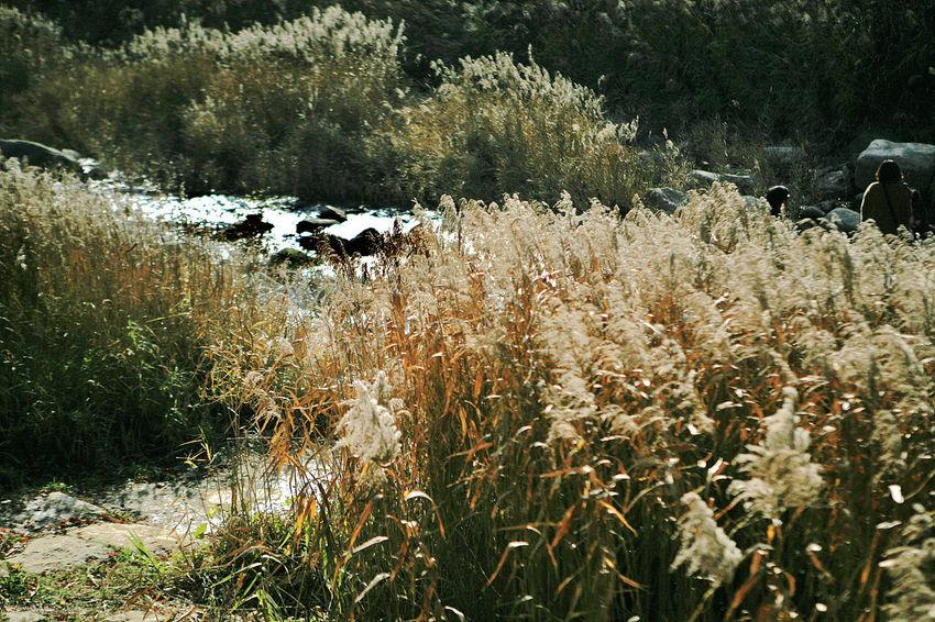 Reeds Brook Munkyungsaejae Munkyung South Korea Korea Autumn Autumn Colors
