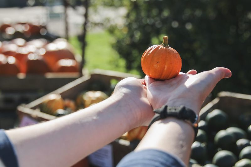 Midsection of person holding pumpkin