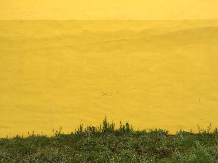 Yellow landscape against sky