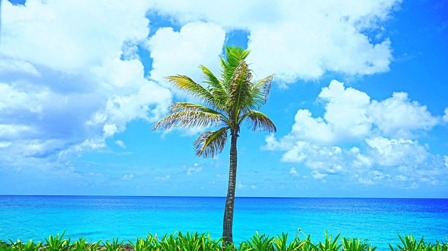 Palma solitaria en san Andrés Sea Palm Tree Nature Beauty In Nature Sky Water Horizon Over Water Cloud - Sky Scenics Beach Tranquil Scene Tranquility Outdoors Growth No People Day